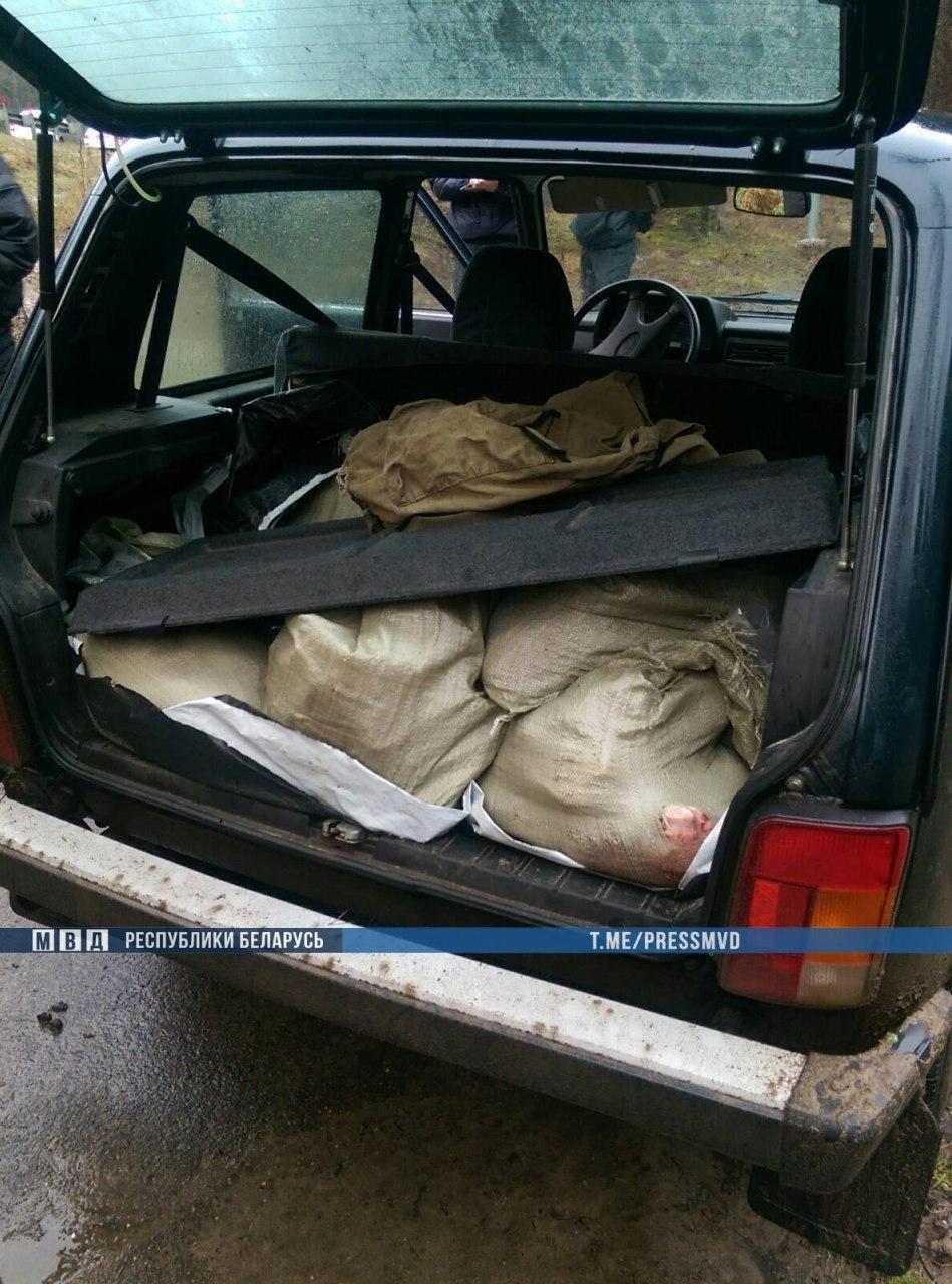 Братья-браконьеры убили беременную лосиху: их задерживал спецназ