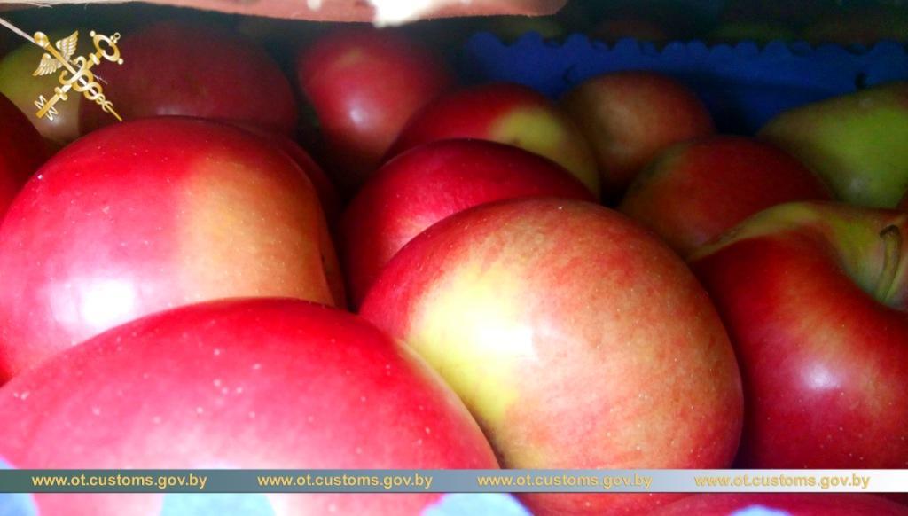 Российский перевозчик пытался провезти польские яблоки на грузовике с поддельными номерами