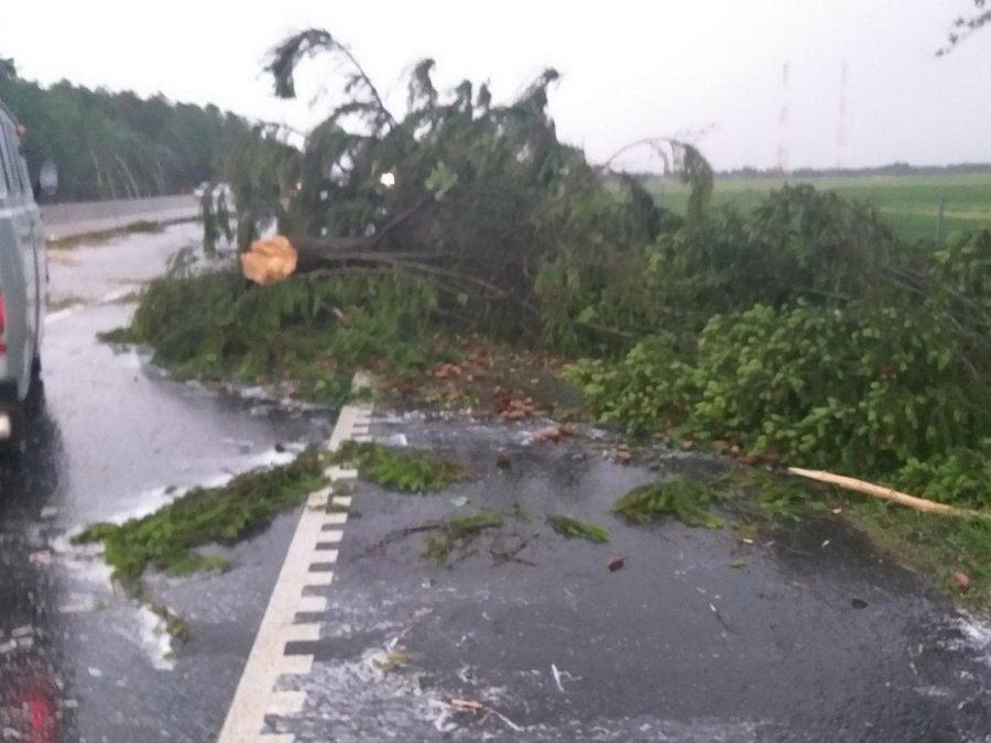 Во время грозы на фуру упало дерево
